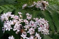 Λουλούδια του δάσους.