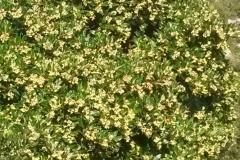 Φθηνοπωρινή κουμαριά - #Autumn_arbutus