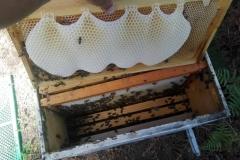 """""""γλώσσες"""", όπως αποκαλείται το κερί που έχουν χτίσει οι μέλισσες"""